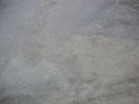 Sea Pearl Closeup